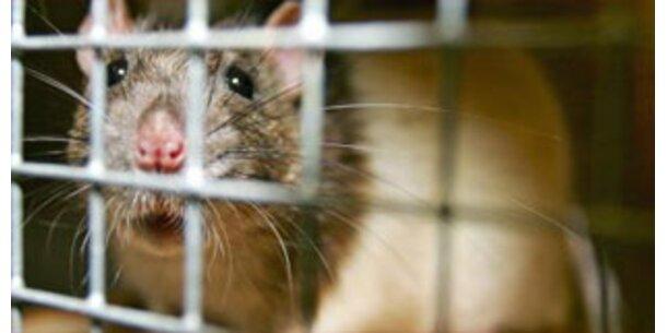 Rasierte Mäuse geben mehr Milch