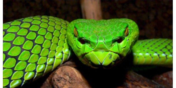 Forscher finden 1.000 neue Arten am Mekong