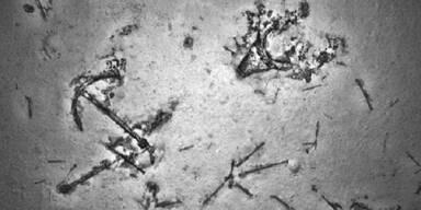 Bei Suche nach MH370 Schiffswrack gefunden
