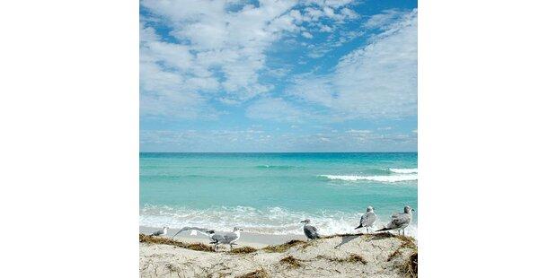 Florida lockt mit günstigen Preisen