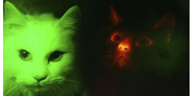 Mordaufruf nach Katzentötung