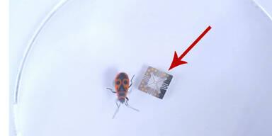 Wiener entwickelten genialen Mini-Sensor