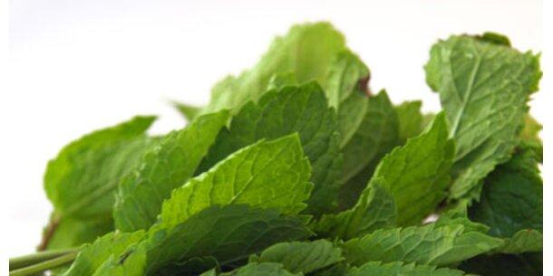 Grüne Medizin boomt