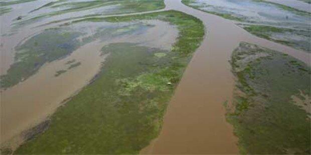 Mississippi-Delta von Ölpest erholt