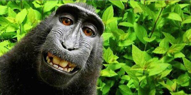 Hat der bizarre Selfie-Streit um Grinse-Affen Naruto jetzt ein Ende?