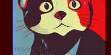 Satire: Katze kandidiert als Bürgermeister