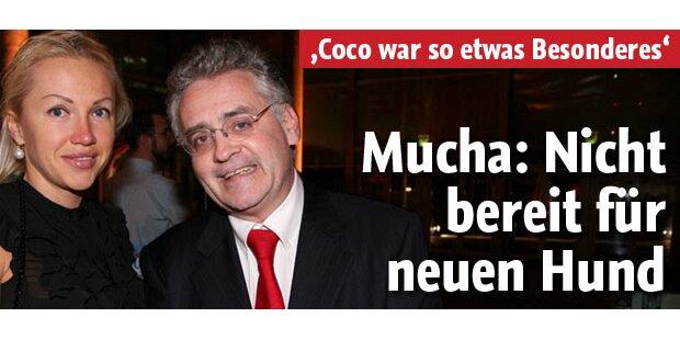 """Mucha: """"Nicht bereit für neuen Hund!"""