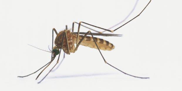 Killermücken sorgen weiterhin für Todesfälle im Urlaubsparadies