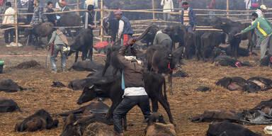 Zehntausende Tiere mit Macheten abgeschlachtet