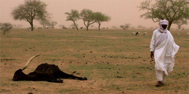 W-Afrika droht tödliche Hunger-Katastrophe