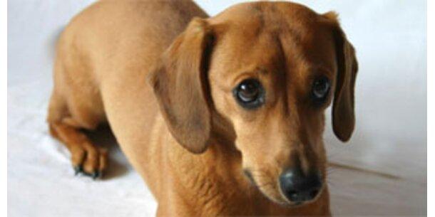 Selina ist Österreichs süßester Hund 2007