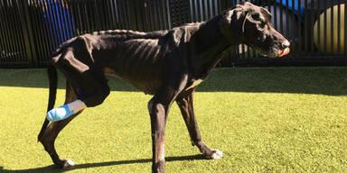 Hund frisst sich aus Hunger ein Bein ab