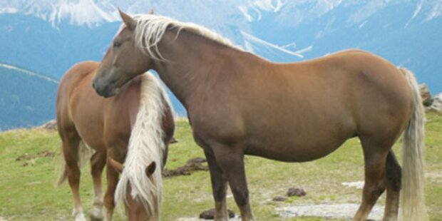 Wütendes Pferd biss Tiroler ins Gesicht