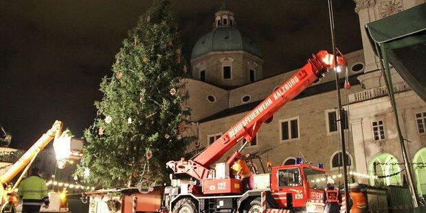 Ein neuer Baum für Salzburg