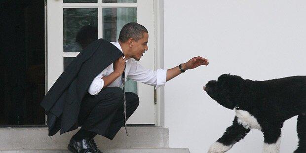 Obamas Hund fällt Mädchen an