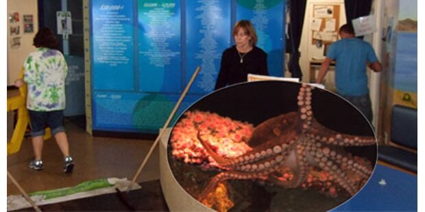 Oktopus setzt Zoo in Kalifornien unter Wasser