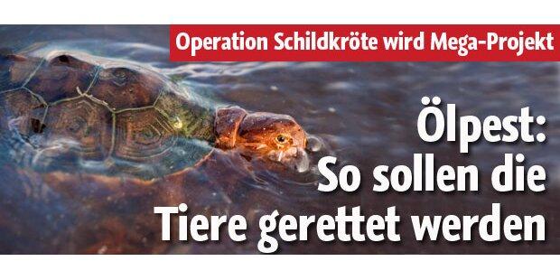 So sollen die Tiere gerettet werden