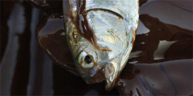 780 Mio. Liter Öl aus Leck ausgetreten