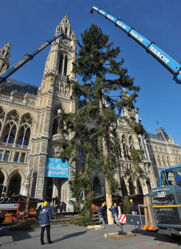 Weihnachtsbaum Rathausplatz