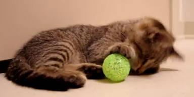 Oskar blinde Katze