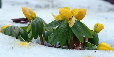 Ostern 2015: So kalt wird es in Österreich