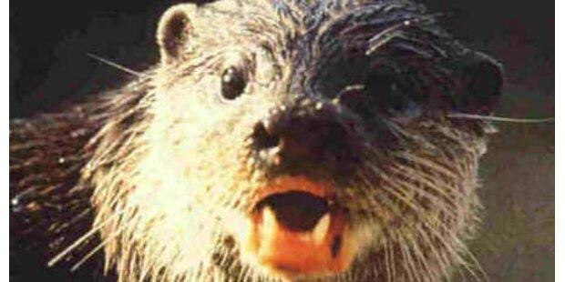 Vorarlbergerin von Ottern gebissen