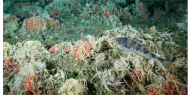 Meereskatastrophe durch erhöhte Biospritproduktion