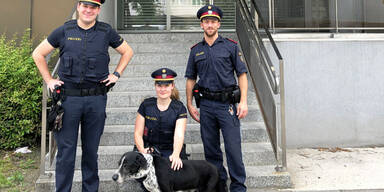 Hund stürzte in Bach und war geschwächt - Polizisten retteten das Tier