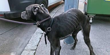Hunde hungerten in Drogenbunker