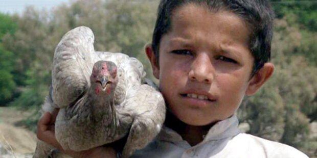 Millionen Tiere verenden in Pakistan