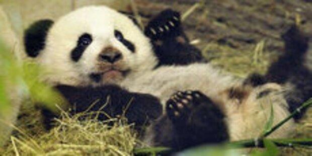 Fu-Hu entdeckt den Frühling