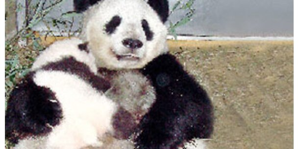 15 Kinder dürfen zu Fu Long nach Schönbrunn