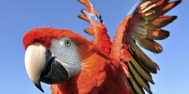 Radar blitzte Papagei im Tiefflug