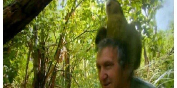 Papagei begattet Zoologen