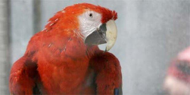 Papagei starb trotz 100.000-$-Therapie