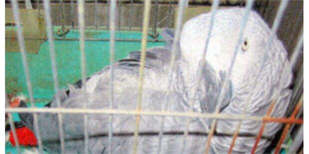 Entflogener Papagei erzählte Polizei seine Adresse