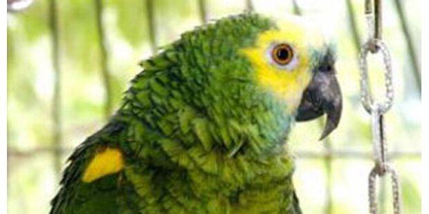 Russin hatte 50 Papageien unterm Mantel