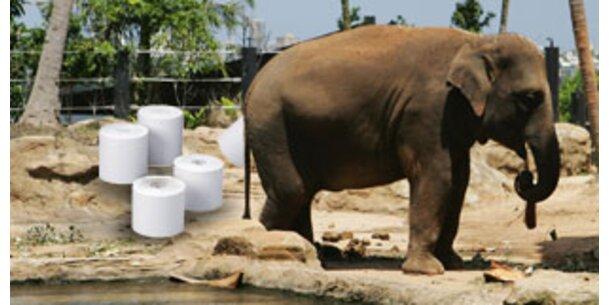 Papier aus Elefantenkot stinkt nicht