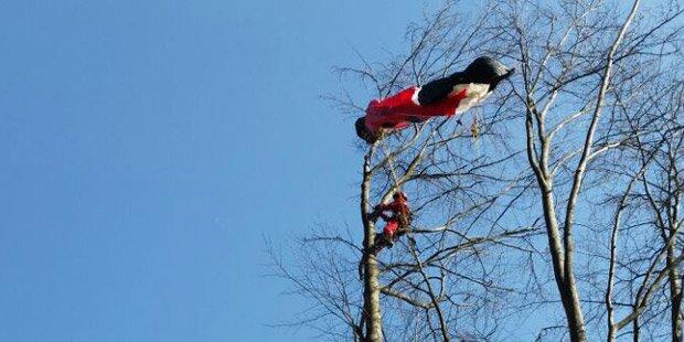 Paragleiter saß 1,5 Stunden auf Baum fest