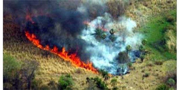 Schwere Waldbrände in Paraguay
