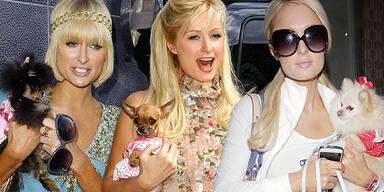 Paris Hilton und Hunde