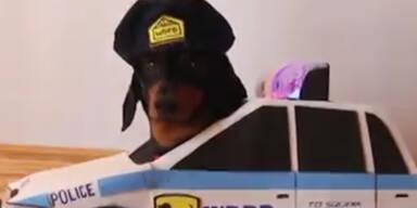 Achtung Hundepolizei!