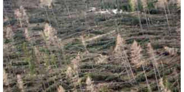 Horrende Sturmschäden in Steiermark und Kärnten
