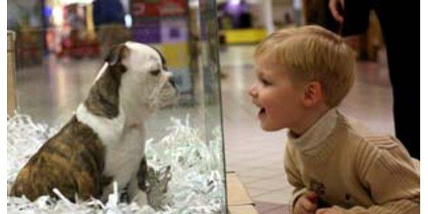 Haustiere kosten Österreicher 400 Mio. im Jahr