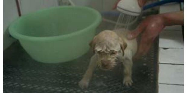Alle Haustiere in L.A. sollen sterilisiert werden