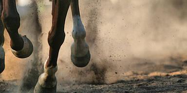 Frau durch Pferdetritt verletzt