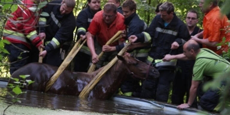 Pferd aus Swimming Pool gerettet