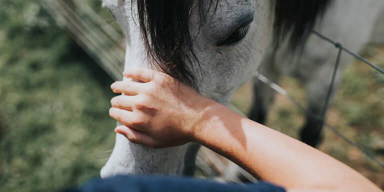 Digitale Pferde-Therapie für kleine Risiko-Patienten