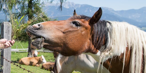 Pferd trat Besitzerin: 25-Jährige verletzt