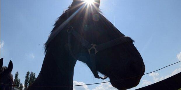 Reitunfall: 22-Jährige vom eigenen Pferd erdrückt